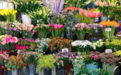 Kasvikirjastosta kasvitietoa kätevästi – lue hoitovinkit ja opiskele uusia kasveja
