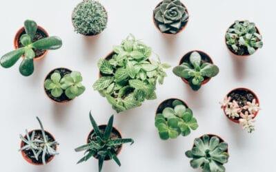 Kun kasvi kaipaa uutta ruukkua – katso vinkit mullanvaihtoon