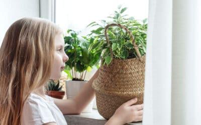 Miten viherkasveja lisätään jakamalla? Katso ohjeet ja jakamisesta hyötyvät viherkasvit