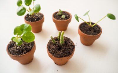 Kuinka voit lisätä itse viherkasveja – katso vinkit pistokaslisäykseen