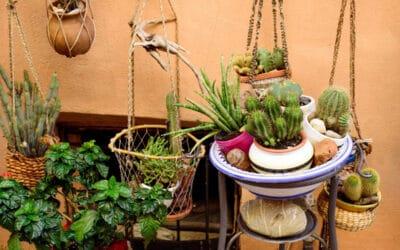 Kaktus amppelissa – helppohoitoinen ja näyttävä