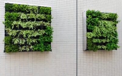 Kasvit seinälle!