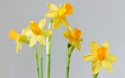 Keveä pääsiäisasetelma