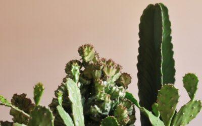 Kaktukset pääkalloruukuissa