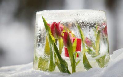 Kukkajäälyhty