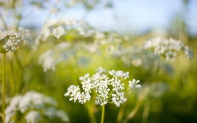 Tee kiva kukka-asetelma luonnonkukista