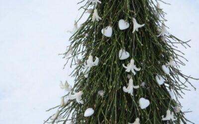 Rakenna joulupuu mustikanvarvuista