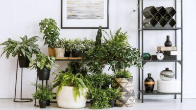 Viherkasvit puhdistavat sisäilmaa