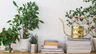Viherkasvien keväthuolto - mitä vihreille ystävillesi kuuluu?