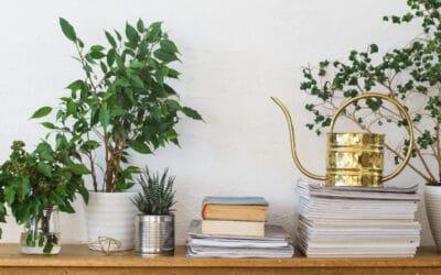 Viherkasvien keväthuolto – mitä vihreille ystävillesi kuuluu?