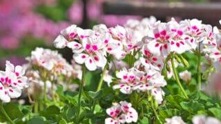 Aurinkoisen paikan kukkijat