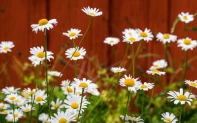 Loihdi luonnonkukilla kaunis juhannus