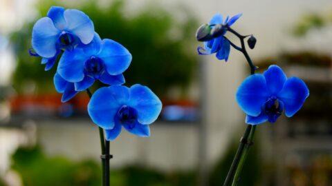 Kukkia komistukselle