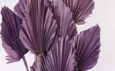 Värjätyt kuivakukat – sisusta suosikkiväreilläsi