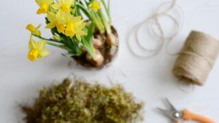 Tee itse narsisseista keväinen amppeli