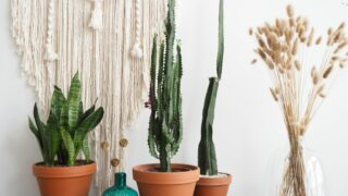 Trendikkäimmät viherkasvit hyppäävät 70-luvulta tähän päivään - löytyykö sinun kotoasi nämä halutuimmat kasvit?
