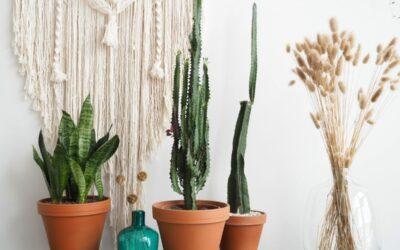 Trendikkäimmät viherkasvit hyppäävät 70-luvulta tähän päivään – löytyykö sinun kotoasi nämä halutuimmat kasvit?
