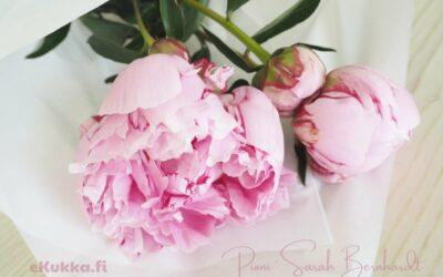 Täydellinen vaaleanpunainen pioni