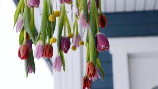 Tulppaanit jäätyvät pakkasessa muotoonsa – tee niistä hauska himmeli ulos!