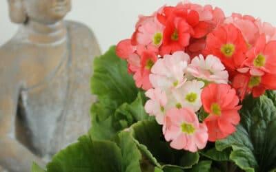Tuo aurinko kotisi sisustukseen keväisillä kukkivilla ruukkukasveilla – katso vinkit ja hoito-ohjeet