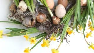 Keväinen narsissikranssi on villi ja hurmaava - näin onnistut