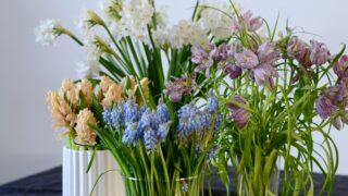 Kurkkaa vinkit keväisistä sipulikukista - näitä kukkia saa leikkona!