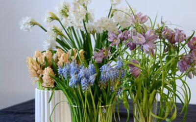 Kurkkaa vinkit keväisistä sipulikukista – näitä kukkia saa leikkona!