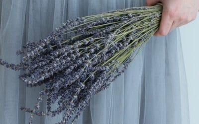 Huumaavasti tuoksuva laventeli – vinkit ja hoito-ohjeet