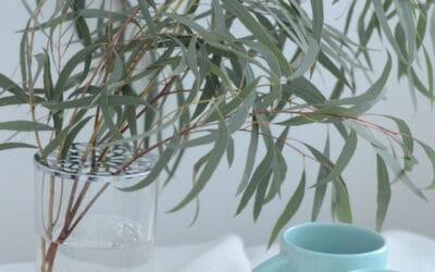 Valloittavat eukalyptukset – tutustu eri lajeihin!