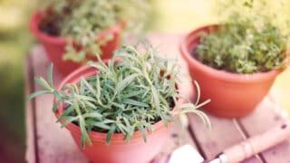 Suosituimmat yrtit - kasvata terassilla tai parvekkeella