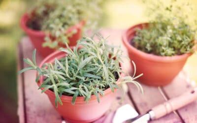 Suosituimmat yrtit – kasvata terassilla tai parvekkeella