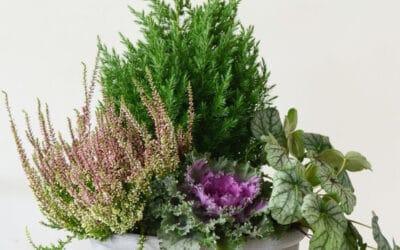Syysvihreät täydentävät kukkaistutuksen – tunnistatko nämä kasvit?