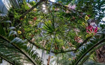The Hanging Garden – kukkasidontanäyttely Oulun yliopiston kasvitieteellisessä puutarhassa 14. – 17.10.2021