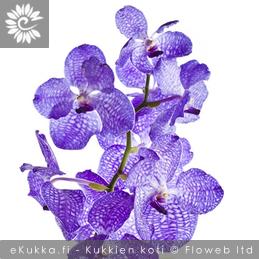 Vanda orkidea yleisimmät leikkokukat