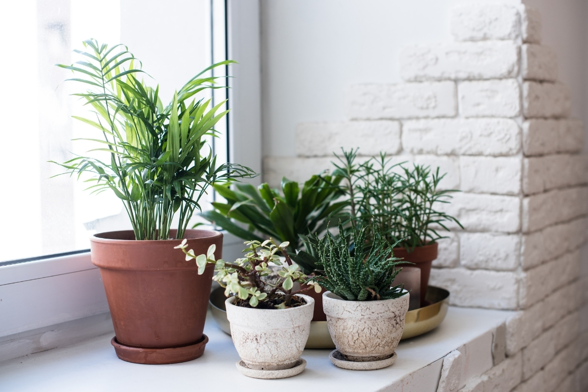 Huonekasvit Netistä